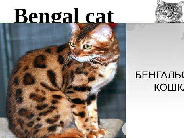Bengal cat БЕНГАЛЬСКАЯ КОШКА
