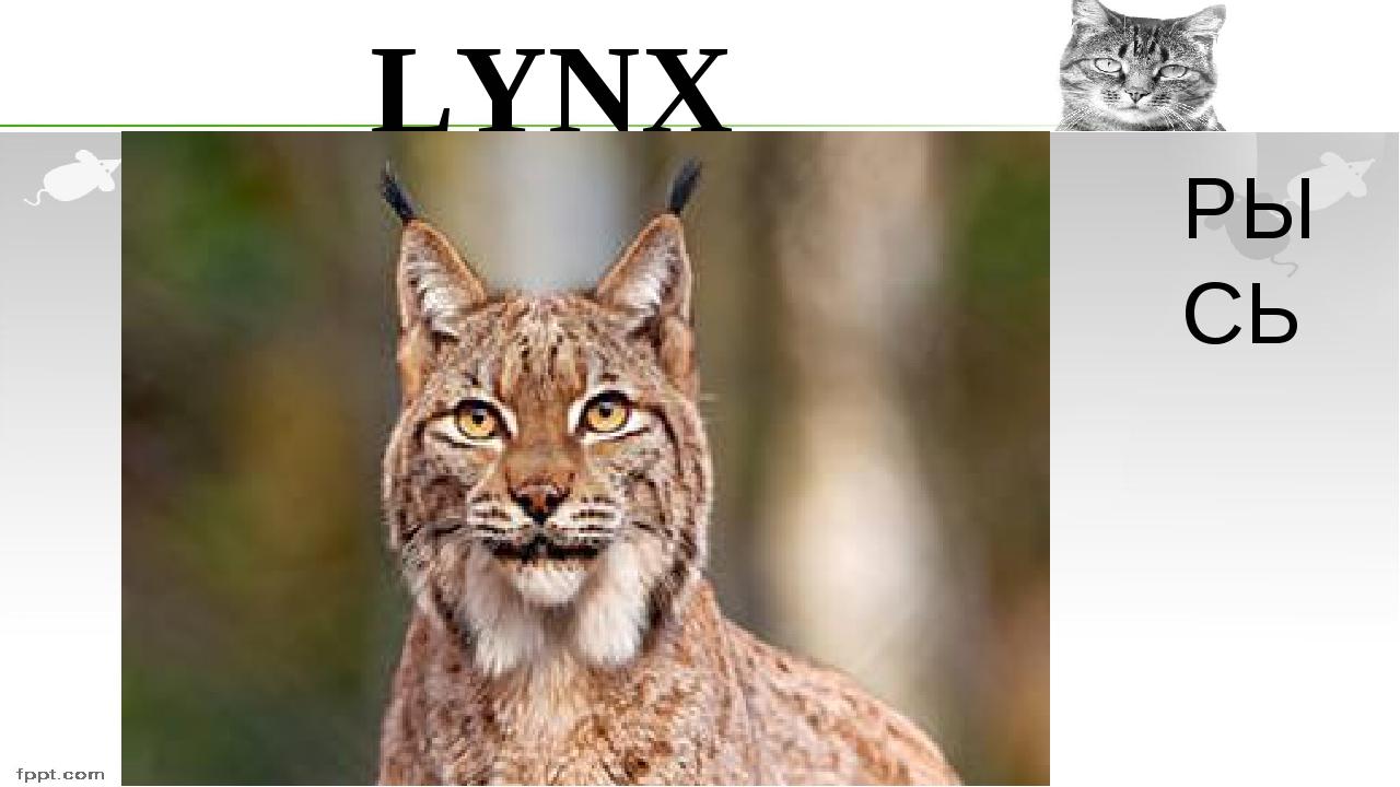 LYNX РЫСЬ