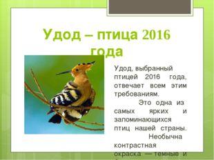 Удод – птица 2016 года Удод,выбранный птицей 2016 года, отвечает всем этим