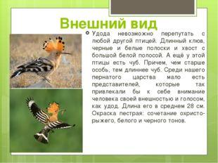 Внешний вид Удода невозможно перепутать с любой другой птицей. Длинный клюв,