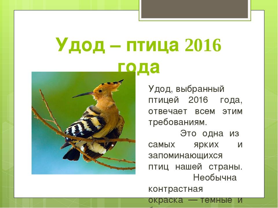 Удод – птица 2016 года Удод,выбранный птицей 2016 года, отвечает всем этим...