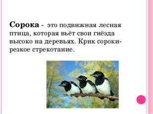 Сорока - это подвижная лесная птица, которая вьёт свои гнёзда высоко на дерев