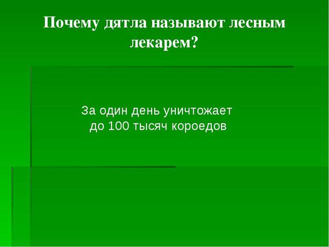 Почему дятла называют лесным лекарем? За один день уничтожает до 100 тысяч к...