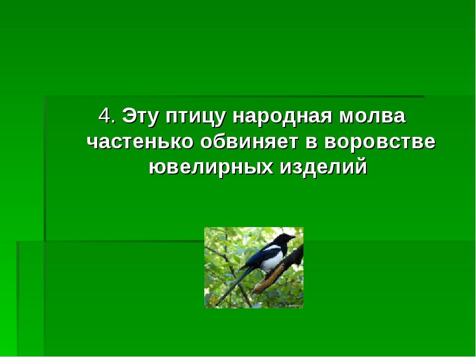 4. Эту птицу народная молва частенько обвиняет в воровстве ювелирных изделий