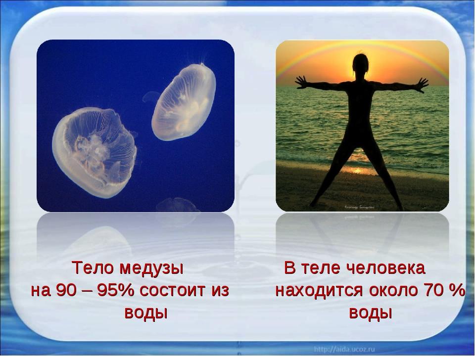 Тело медузы на 90 – 95% состоит из воды В теле человека находится около 70 %...