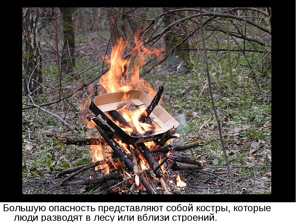 Большую опасность представляют собой костры, которые люди разводят в лесу или...