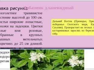 Лабазник дланевидный многолетнее травянистое растение высотой до 100 см. Лист