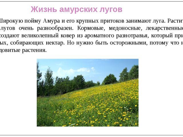 Жизнь амурских лугов Широкую пойму Амура и его крупных притоков занимают лу...