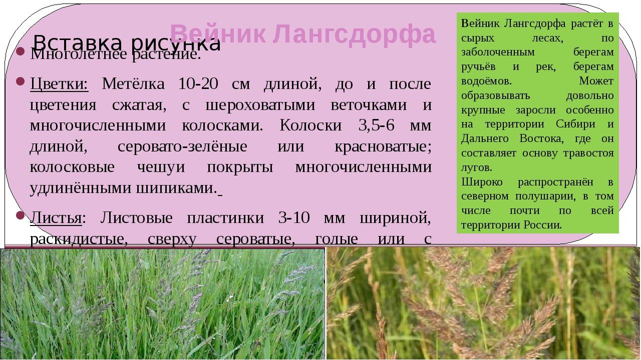Вейник Лангсдорфа Многолетнее растение. Цветки: Метёлка 10-20 см длиной, до и...