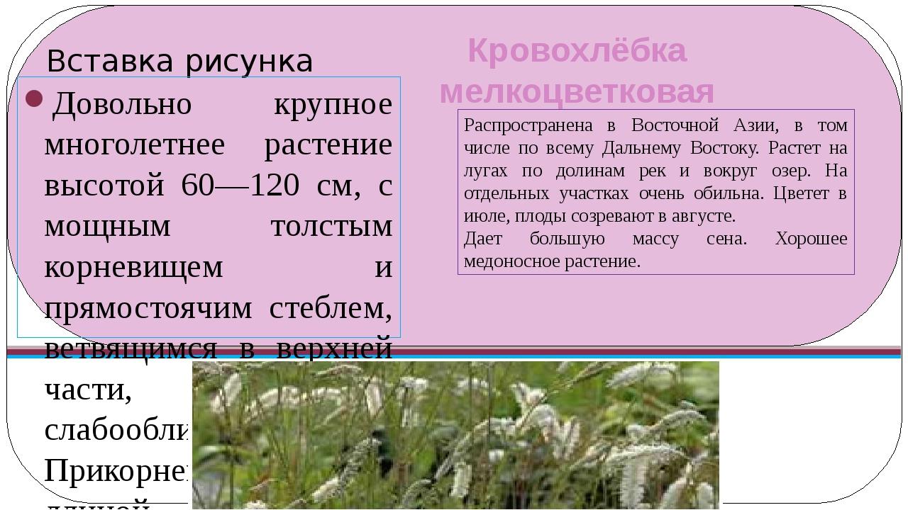 Кровохлёбка мелкоцветковая Довольно крупное многолетнее растение высотой 60—1...