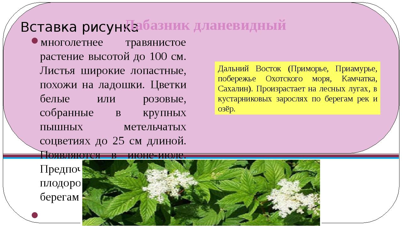 Лабазник дланевидный многолетнее травянистое растение высотой до 100 см. Лист...