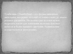 Тумбелина (Thumbelina) – это форма шикарных ампельных махровых петуний от тем