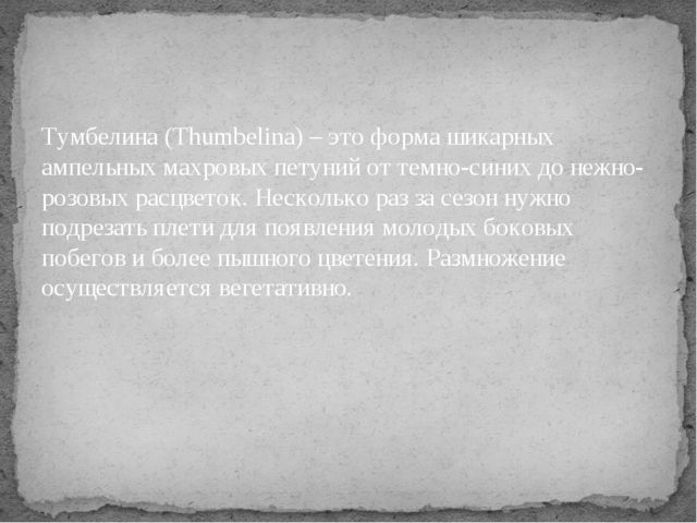 Тумбелина (Thumbelina) – это форма шикарных ампельных махровых петуний от тем...
