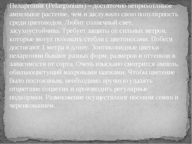 Пеларгония (Pelargonium) – достаточно неприхотливое ампельное растение, чем и...