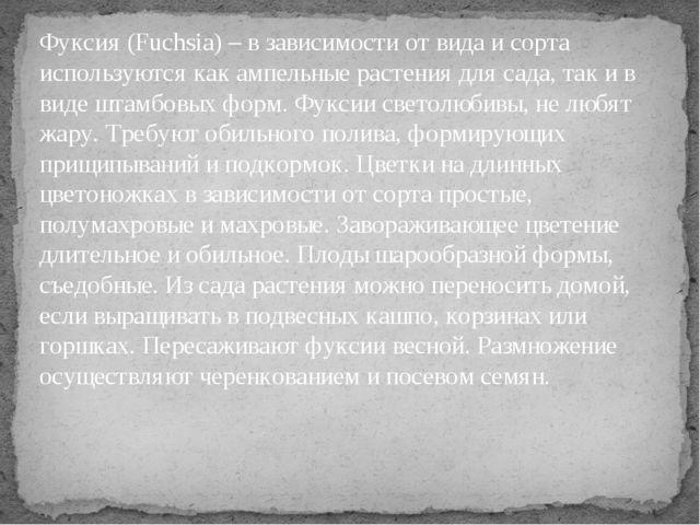 Фуксия (Fuchsia) – в зависимости от вида и сорта используются как ампельные р...