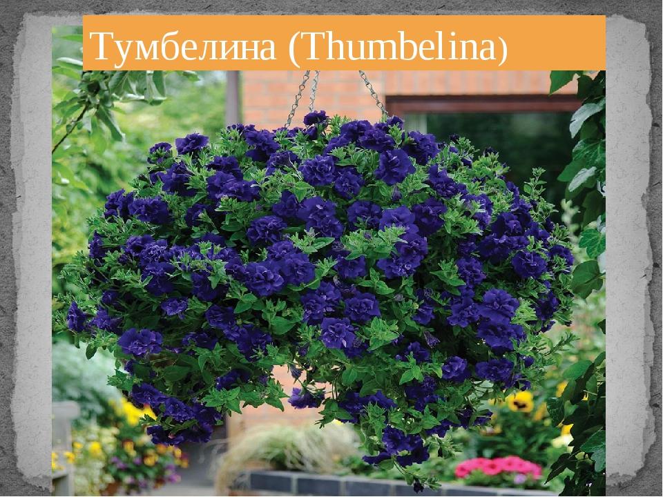 Тумбелина (Thumbelina)