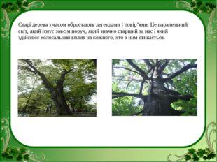 Старі дерева з часом обростають легендами і повір'ями. Це паралельний світ, я