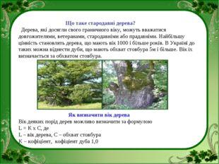 Що таке стародавні дерева? Дерева, які досягли свого граничного віку, можуть