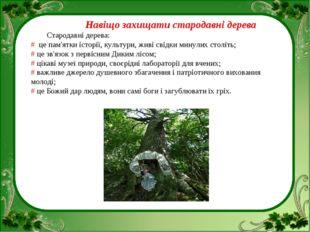 Навіщо захищати стародавні дерева Стародавні дерева: # це пам'ятки історії,