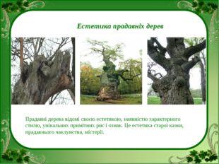 Естетика прадавніх дерев Прадавні дерева відомі своєю естетикою, наявністю х