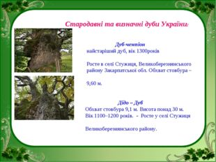 Стародавні та визначні дуби України: Дуб-чемпіон найстаріший дуб, вік 1300ро