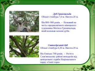 Дуб Грюневальда Обхват стовбура 7,0 м. Висота 20 м. Вік 800–900 років.  Наз