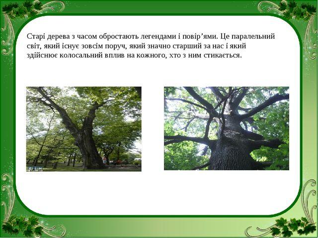 Старі дерева з часом обростають легендами і повір'ями. Це паралельний світ, я...