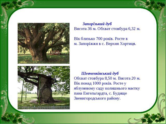 Запорізький дуб Висота 36 м. Обхват стовбура 6,32 м. Вік близько 700 років....
