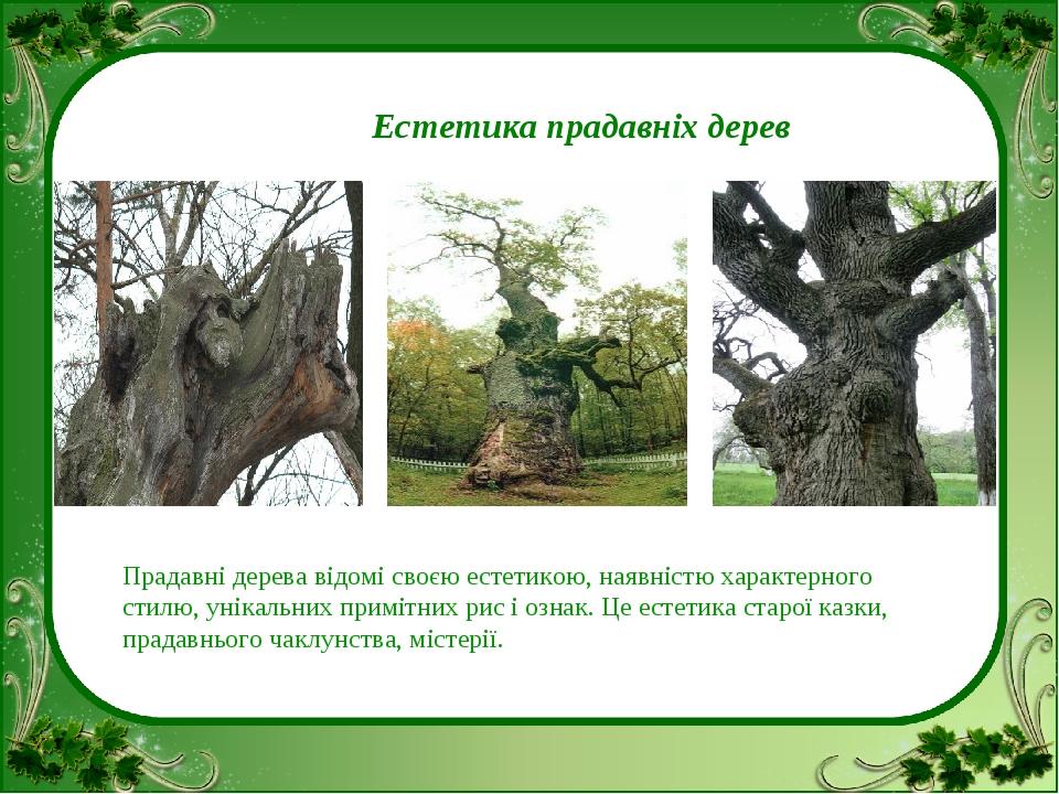 Естетика прадавніх дерев Прадавні дерева відомі своєю естетикою, наявністю х...