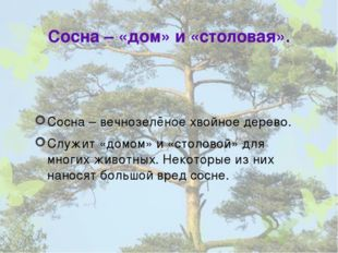 Сосна – «дом» и «столовая». Сосна – вечнозелёное хвойное дерево. Служит «домо