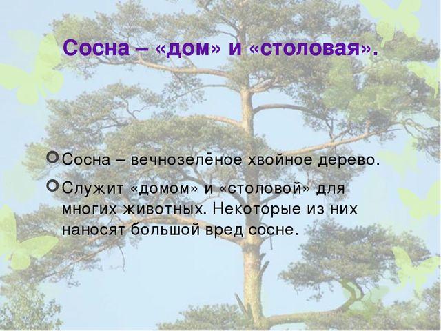 Сосна – «дом» и «столовая». Сосна – вечнозелёное хвойное дерево. Служит «домо...