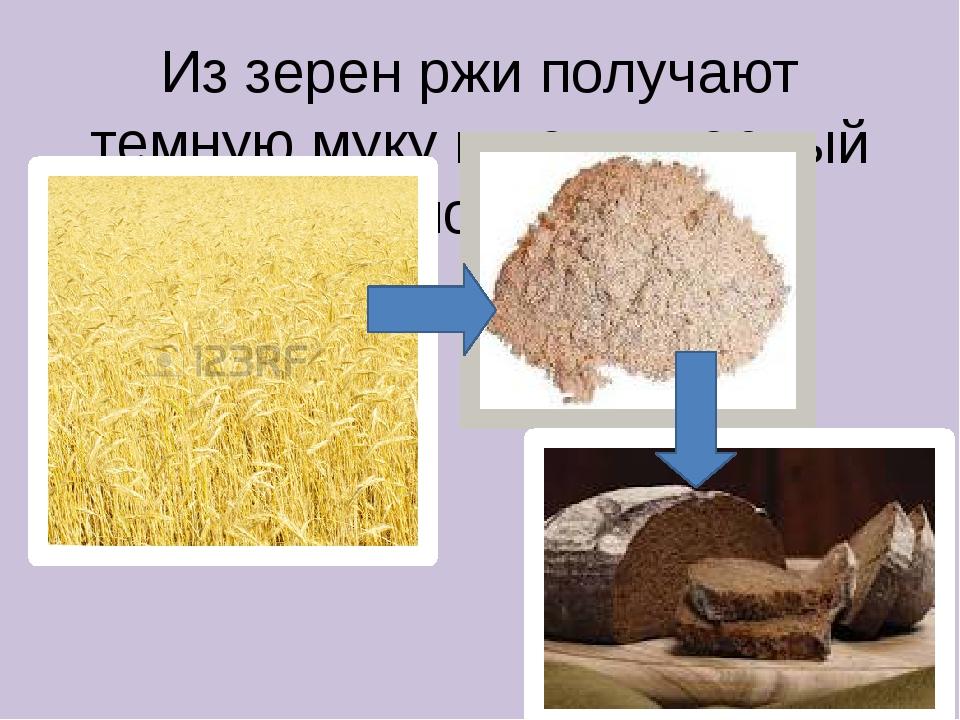 Из зерен ржи получают темную муку и пекут черный ржаной хлеб
