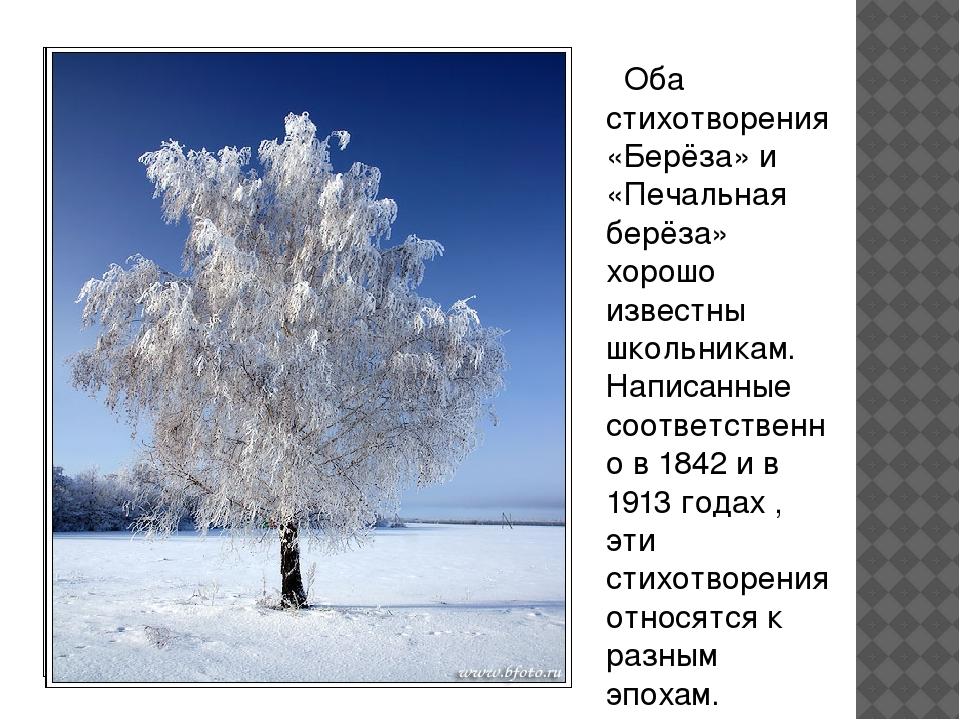 Оба стихотворения «Берёза» и «Печальная берёза» хорошо известны школьникам....