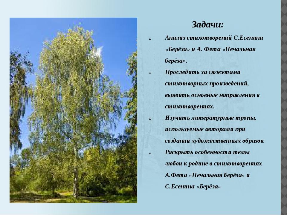 Задачи: Анализ стихотворений С.Есенина «Берёза» и А. Фета «Печальная берёза»....