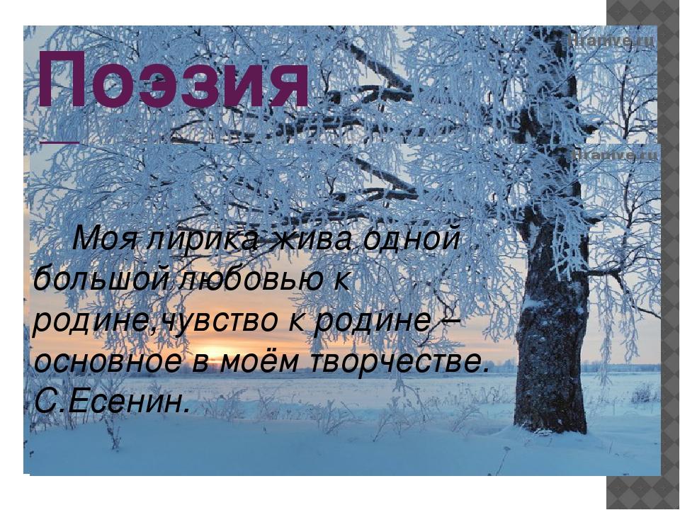 Поэзия Есенина Моя лирика жива одной большой любовью к родине,чувство к родин...