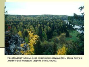 Преобладают таёжные леса с хвойными породами (ель, сосна, пихта) и лиственным