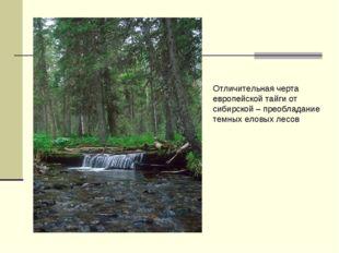 Отличительная черта европейской тайги от сибирской – преобладание темных елов