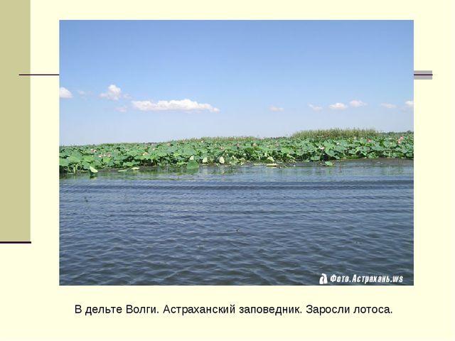 В дельте Волги. Астраханский заповедник. Заросли лотоса.