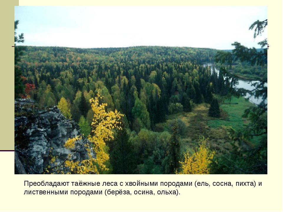 Преобладают таёжные леса с хвойными породами (ель, сосна, пихта) и лиственным...