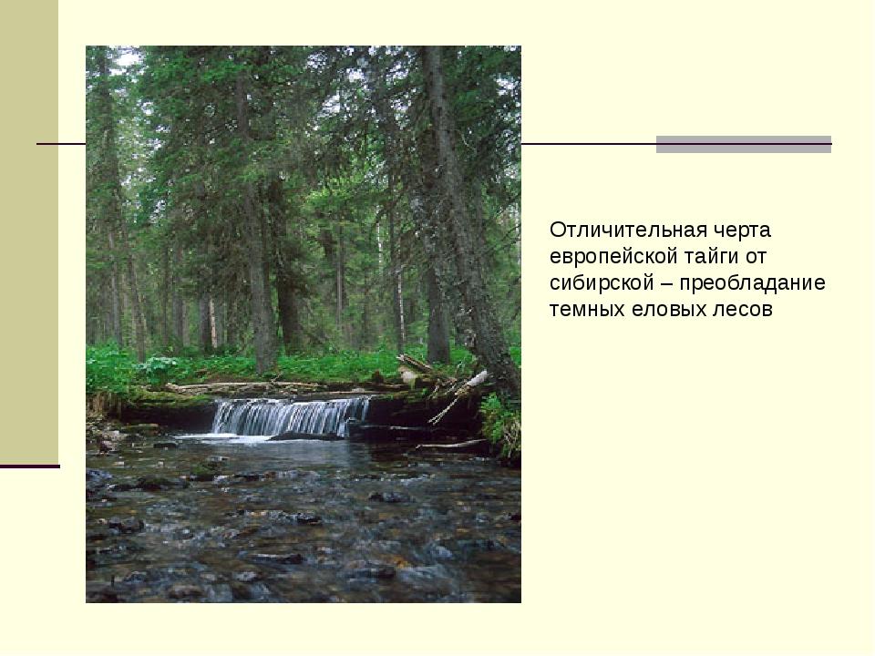 Отличительная черта европейской тайги от сибирской – преобладание темных елов...