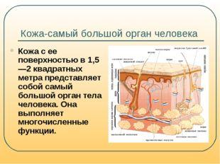 Кожа-самый большой орган человека Кожа с ее поверхностью в 1,5—2 квадратных м