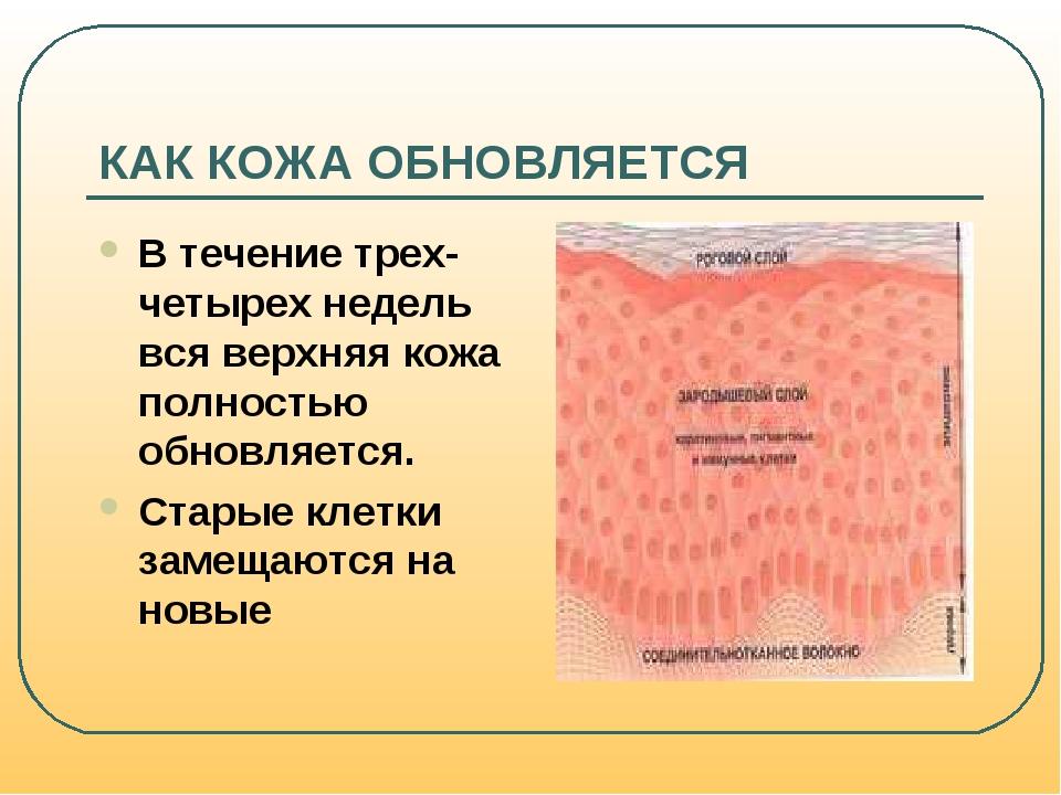Обновление кожи как обновляется кожа