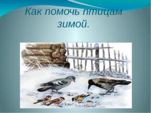 Как помочь птицам зимой.