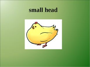 small head