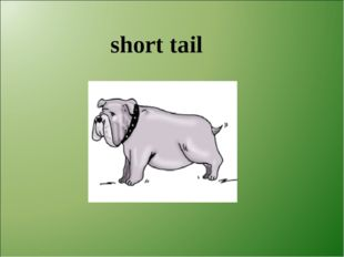 short tail