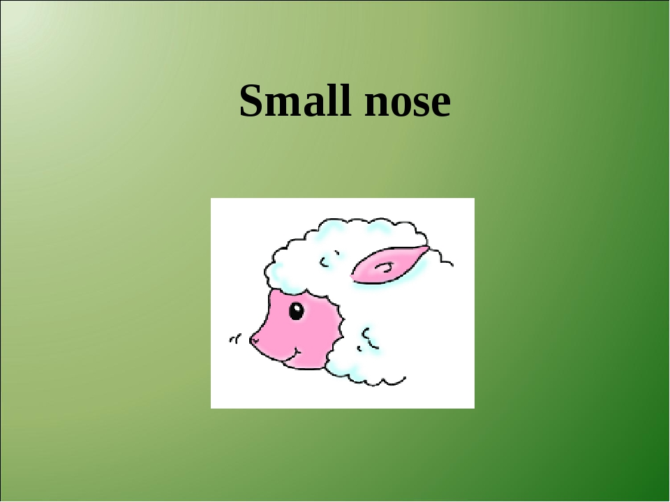 Small nose