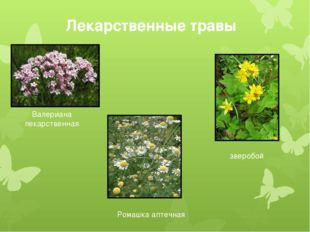 Лекарственные травы Валериана лекарственная Ромашка аптечная зверобой