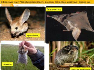 В Красную книгу Челябинской области внесены 176 видов животных. Среди них: ту