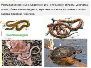 Рептилии занесённые в Красную книгу Челябинской области: узорчатый полоз, обы