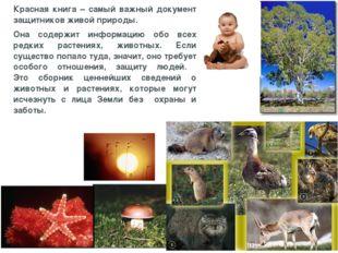 Красная книга – самый важный документ защитников живой природы. Она содержит